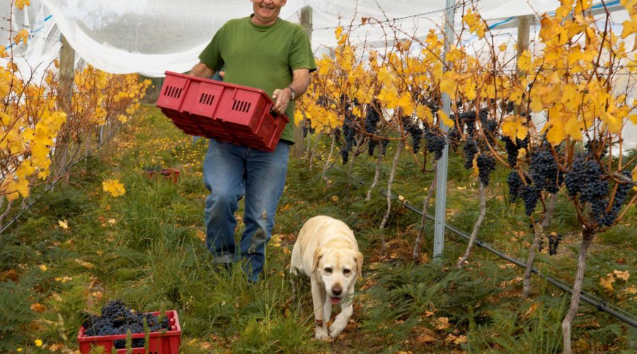How is the industry coping? We asked Wine Tasmania CEO Sheralee Davies.